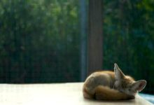 Photo of 4 Ways To Improve Your Sleep Hygiene