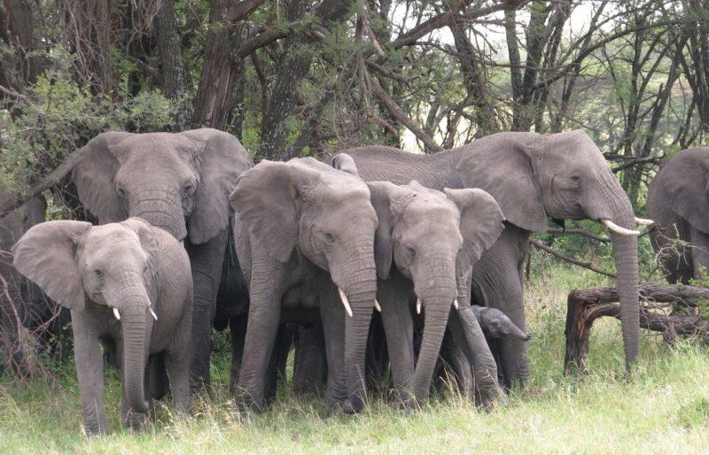 each elephant saw 3 monkeys